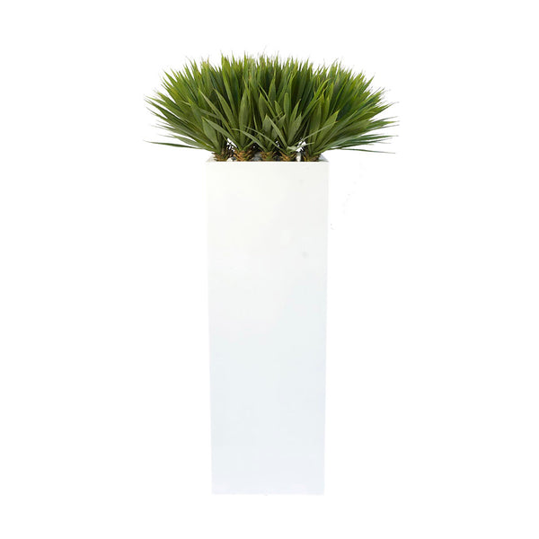 Yucca in Square Tall Glossy Planter
