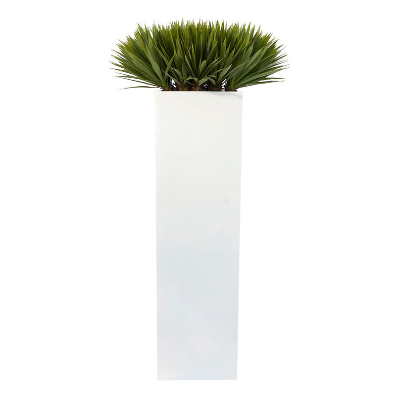 Yucca in Square Tall Glossy Planter • 2 Sizes