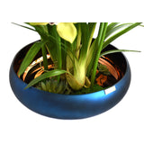 Green Cymbidium Plant w/Succulents and Illusion Water in Blue Bowl Vase