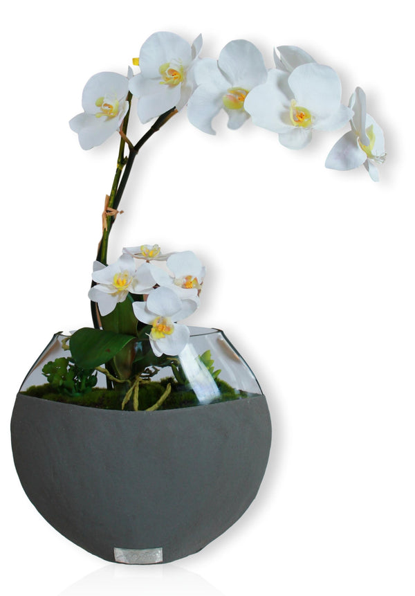 "White Phala Garden with Succulents in 10"" Dark Concrete Moon Vase"