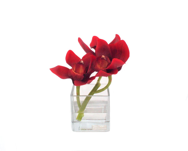 Red Cymbidium Square Vase