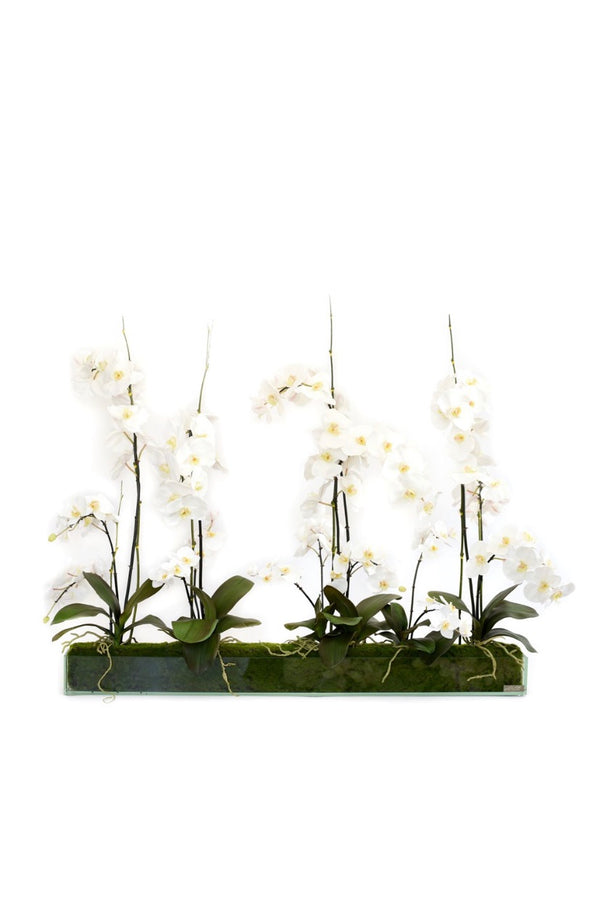 "White Phalaenopsis Garden 48"" Plate Glass Planter"