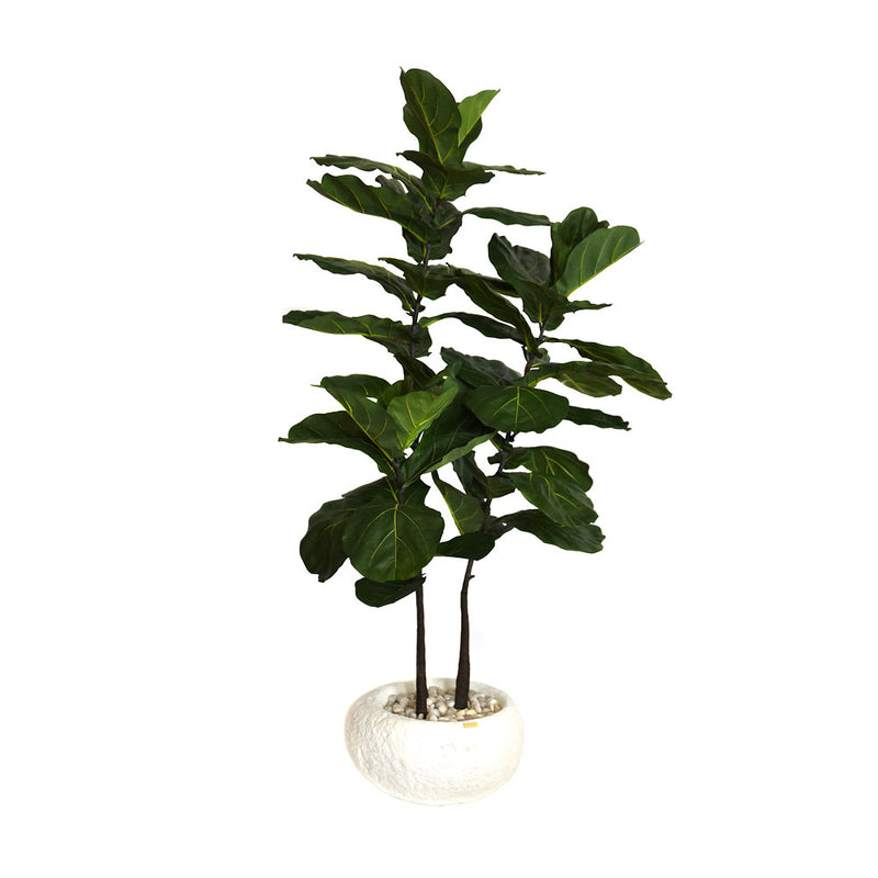 Brazilian Fiddle Fig Tree Rustic Concrete Vase