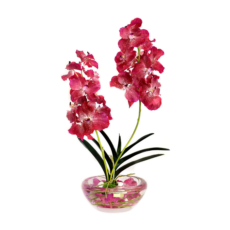 Fuchsia Vanda Plant Bloom Bowl