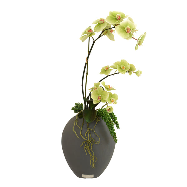 Mini Phalaenopsis Garden in Concrete Oval Vase
