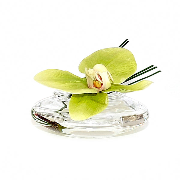 Green Phalaenopsis Disk Bloom