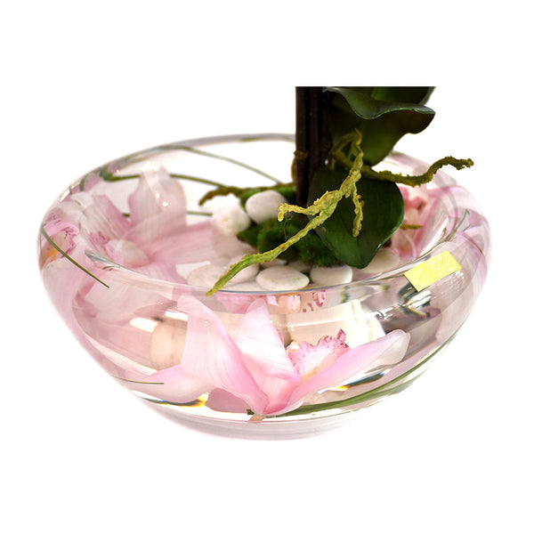 Pink Phalaenopsis Plant Bloom Bowl • 2 Sizes