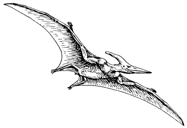 Everything to know about pterodactyl