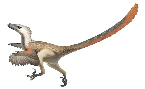 velociraptor with leathers
