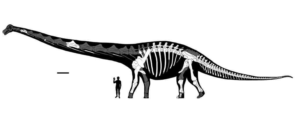 WHAT WAS THE BIGGEST DINOSAUR ?