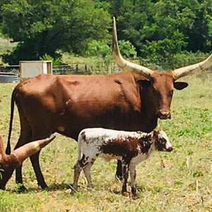 Trophy Watusi Hunt ($2,700)