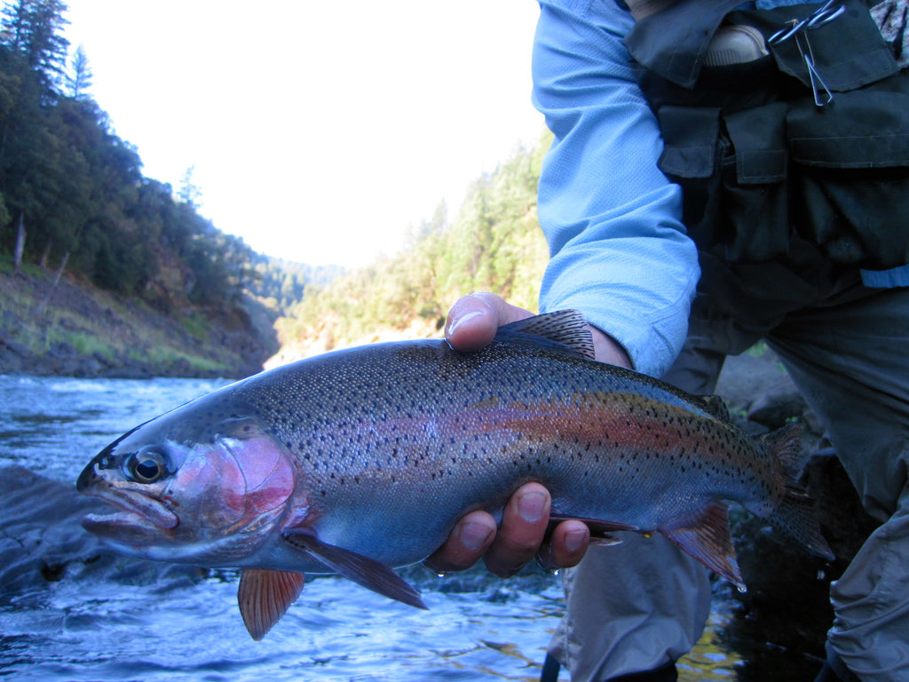 Northern California Trout Fly Fishing Report
