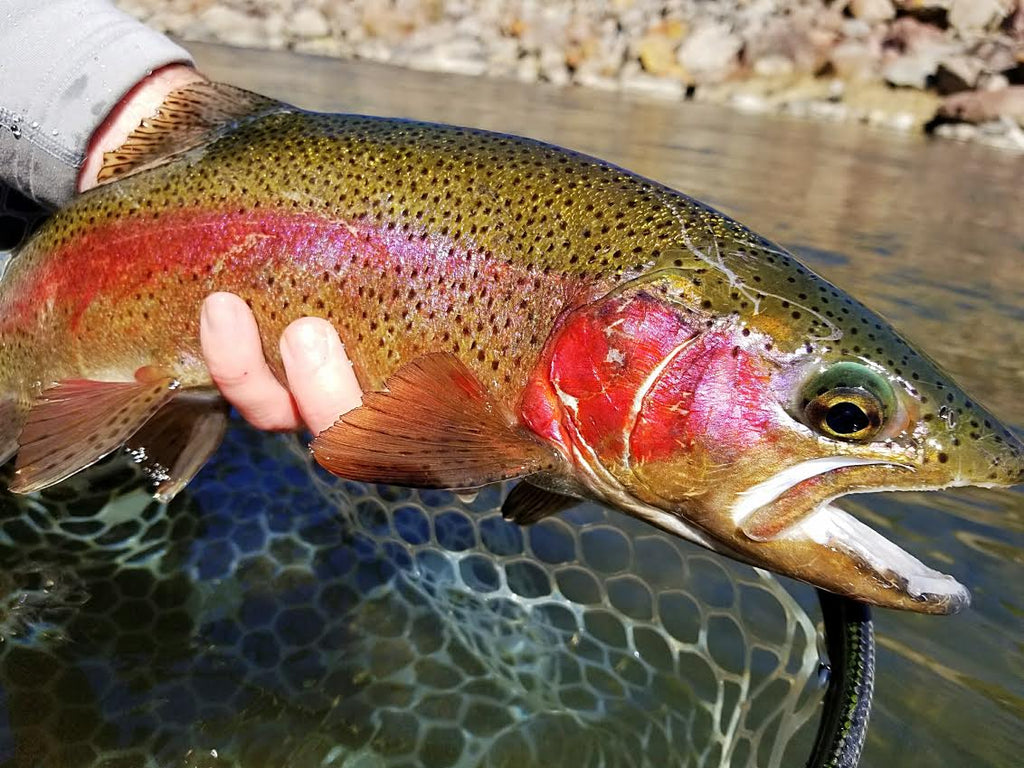 Truckee River Fly Fishing Report