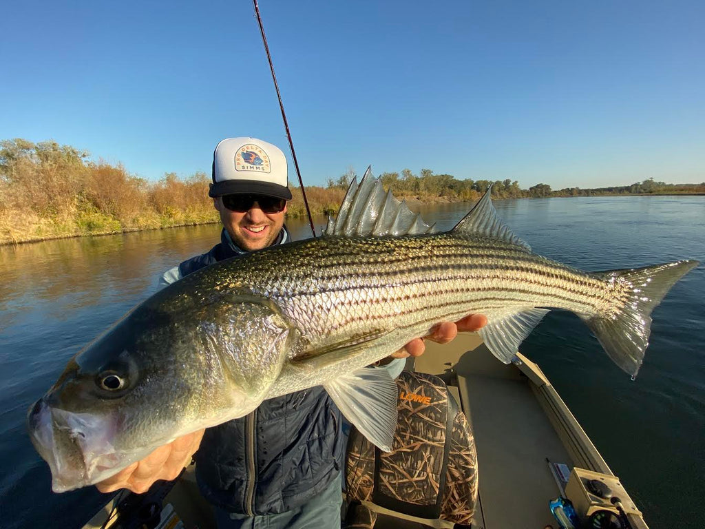 Lower Sacramento River Fly Fishing Report