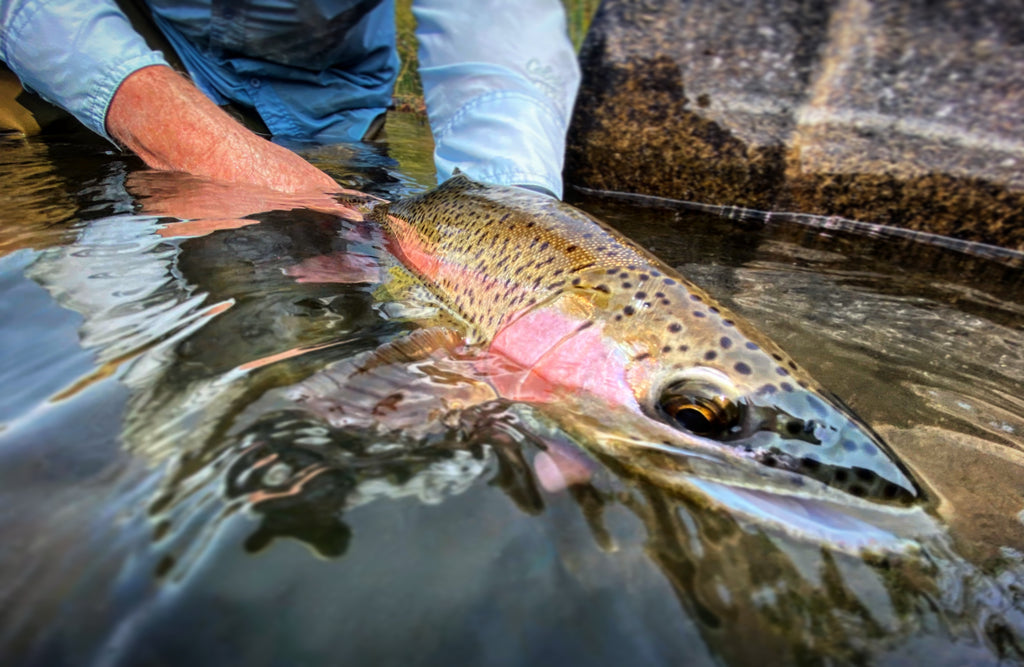 Truckee River Fishing Report