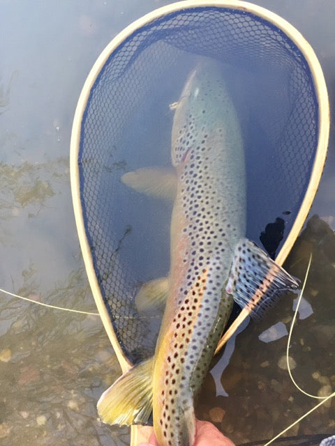 Owyhee Fly Fishing Report