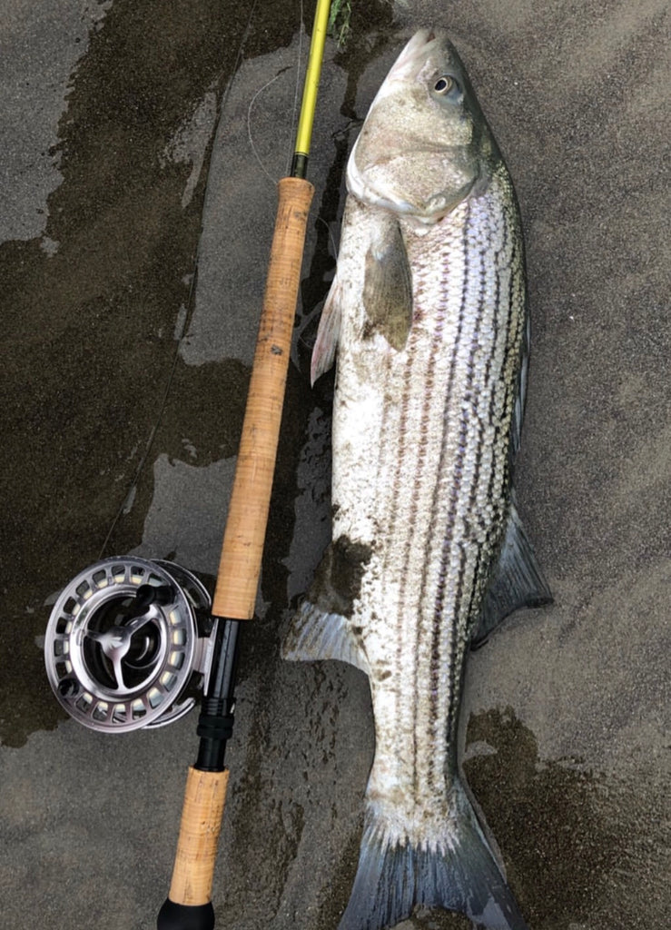 San Francisco Surf Fly Fishing Report