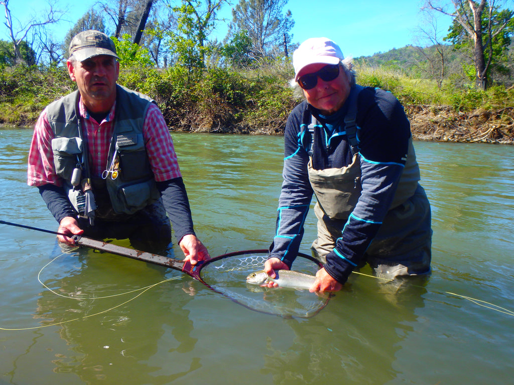 Putah Creek Fly Fishing Report