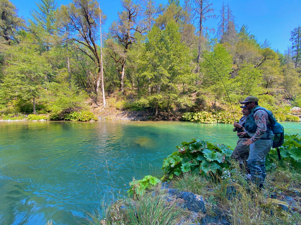 McCloud River, Upper Sacramento, and Klamath River Report
