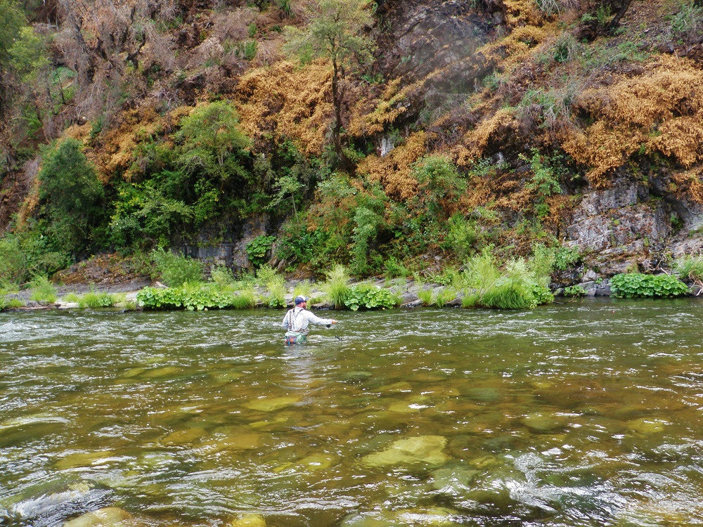 Upper Sac, McCloud River and McCloud Reservoir Fly Fishing Report