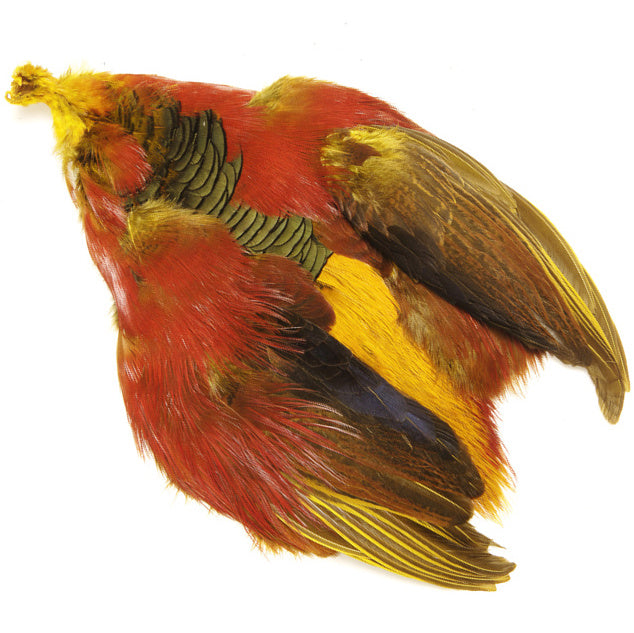 Golden Pheasant Skin-No Head
