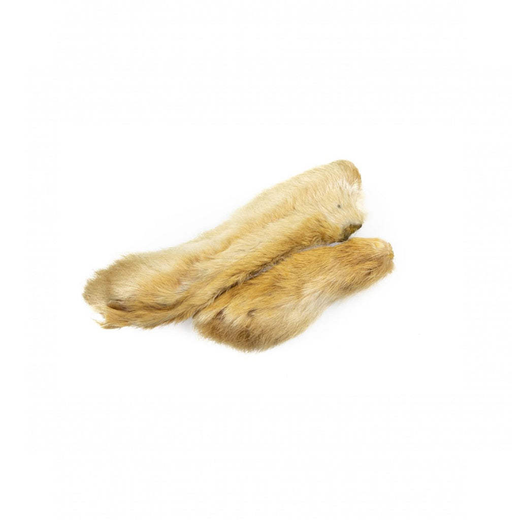 Snowshoe Rabbit Foot
