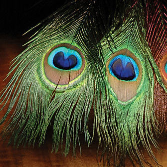 Peacock Eye Stick