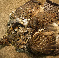 Select Ruffed Grouse Skin