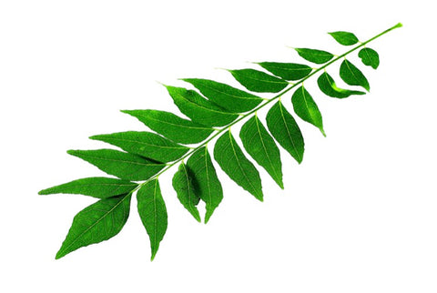 Curry Leaves Pack