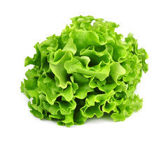 Lettuce - Green Oak