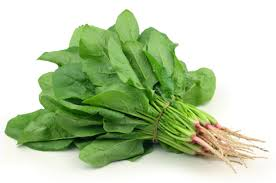 Spinach - English Bunch