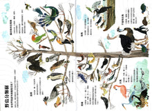 Load image into Gallery viewer, The Big Book of Birds • 野鳥大書BIRDS