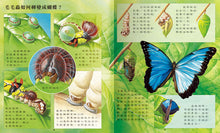 Load image into Gallery viewer, Discovery of Animal Kingdom (Set of 4) • 大自然動物小百科(全4冊)