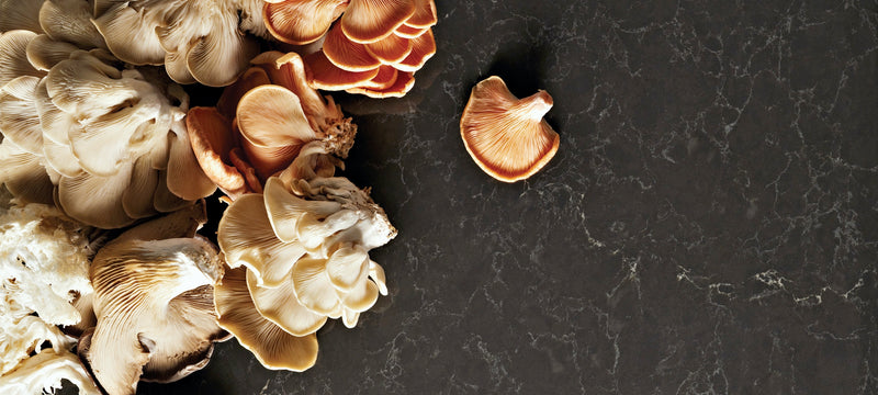 mushrooms on piatra grey counters caesarstone