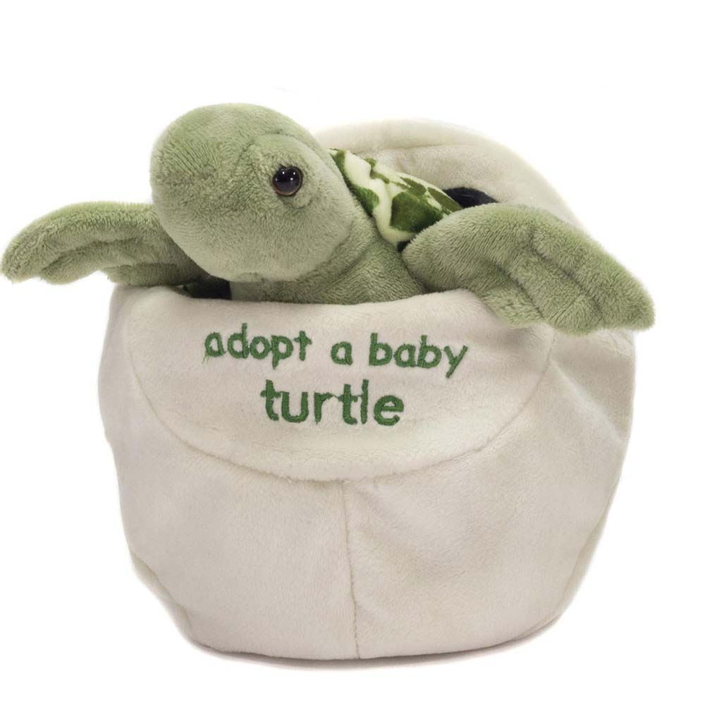 "8"" Adopt a Baby Turtle"