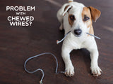 pup holding chewed on cable on floor