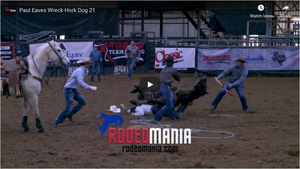 Paul Eaves Roping Accident - Hork Dog 21 Stephensville Texas