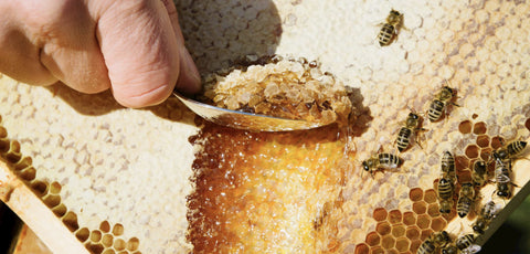 Honey being scraped from a honeycomb with a spoon