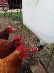 2 1/2 Gallon Poultry Waterer