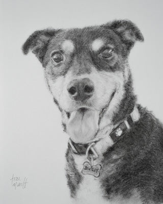Charcoal and Pencil Portrait of Bentley canine by artist Trae Mundt