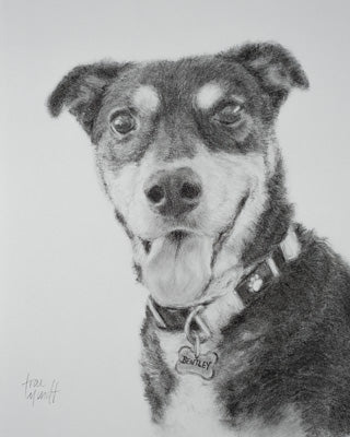 Bentley - Charcoal & Pencil on Paper - 10 x 8