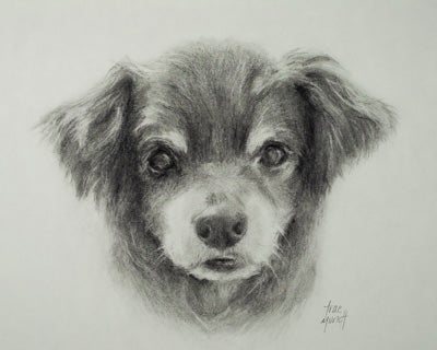 Pencil Portrait of Chihuahua Luey by Artist Trae Mundt
