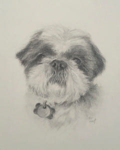 Oakley - Pencil on Paper - 10 x 8