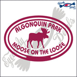 CANADA MOOSE ON THE LOOSE IN ALGONQUIN PARK IN OVAL 5 INCH  DECAL