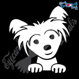 "CHINESE CRESTED DOG HEAD  5"" DECAL"