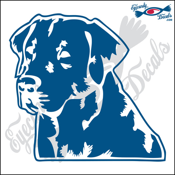 LABRADOR RETRIEVER DOG HEAD  5
