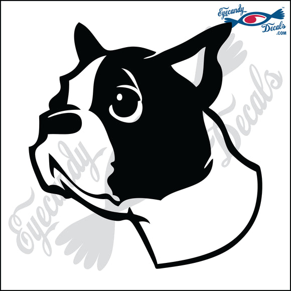 BOSTON TERRIER DOG HEAD  5