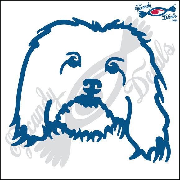HAVANESE DOG HEAD  5
