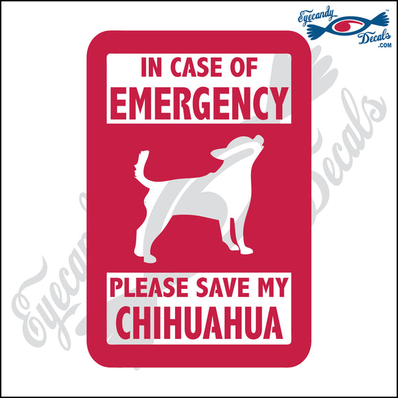 PLEASE SAVE MY CHIHUAHUA  5
