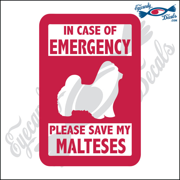 PLEASE SAVE MY MALTESES  5